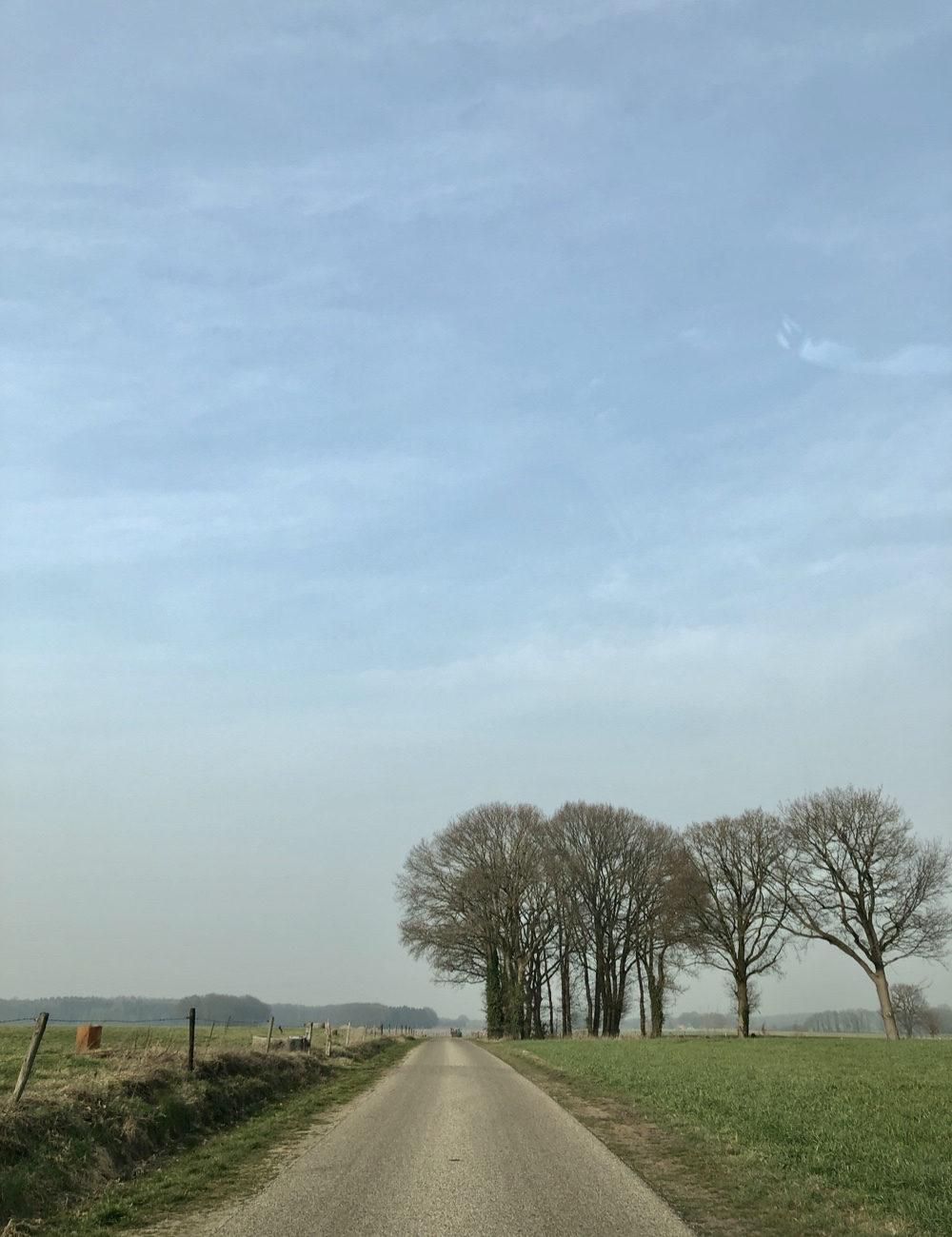Landweggetje door de weilanden met aan de horizon een aantal bomen