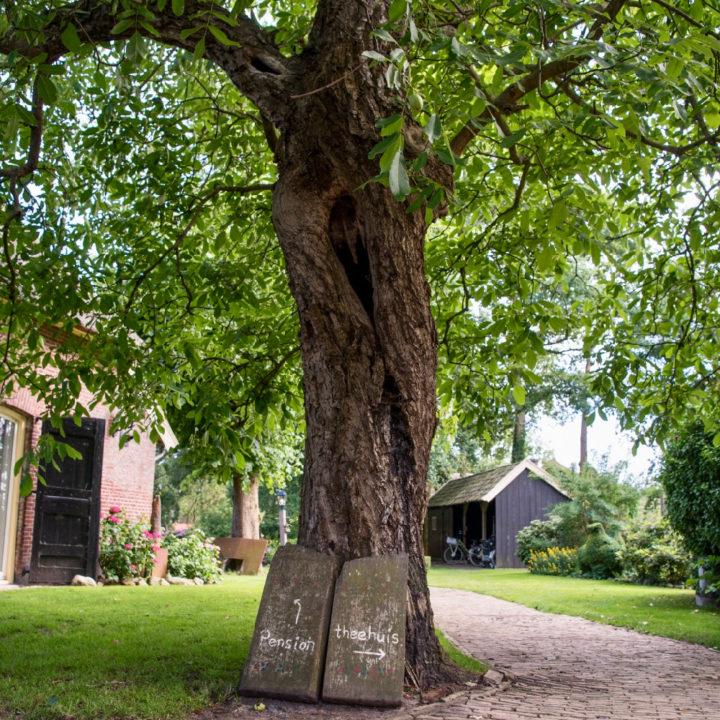 Grote boom op het erf van Twentse boerderij