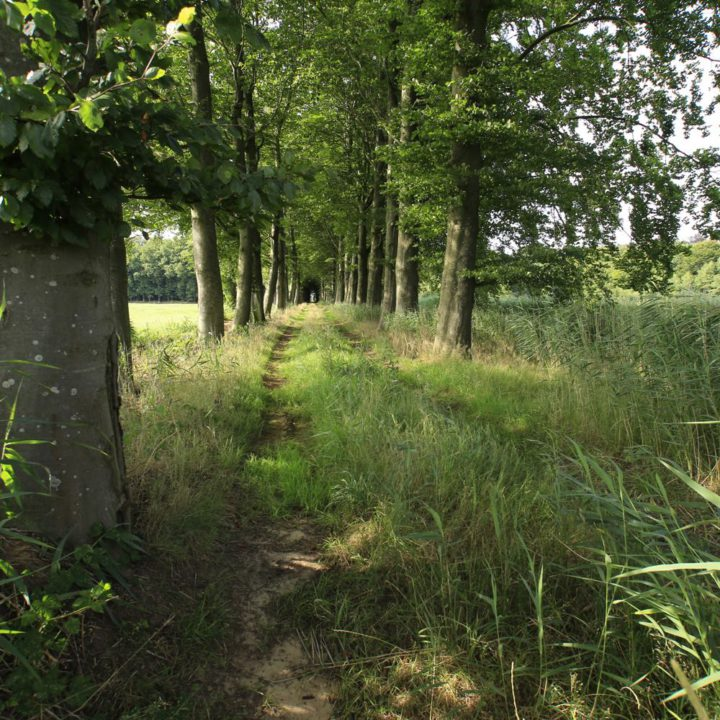 Wandelpad op landgoed de Horte