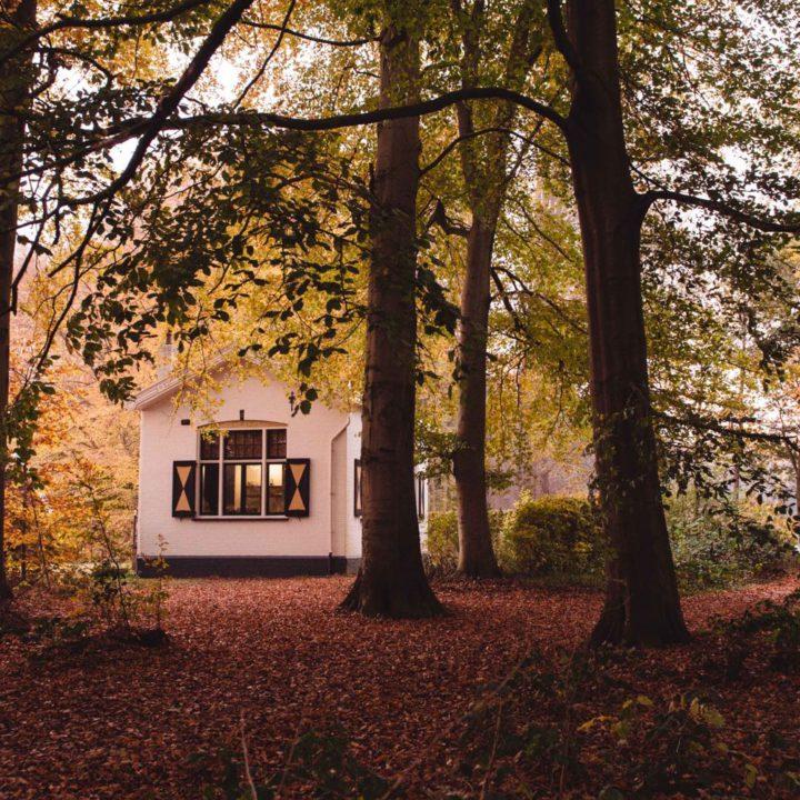 Het Witte Huis in een herfstbos