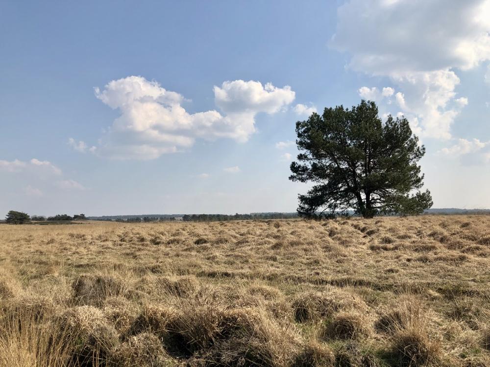 Solitaire boom met wolkenlucht