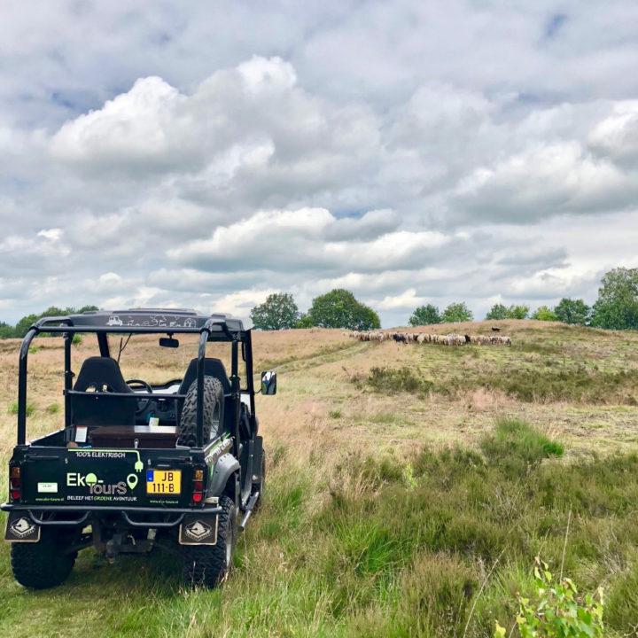 Open terreinwagen op een heuvel met schaapskudde