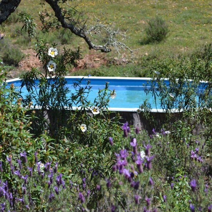 Zwembad tussen de lavendelplanten