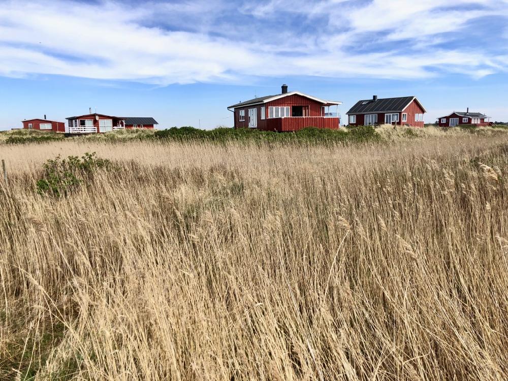 Karakteristieke Deense houten vakantiehuisjes verscholen in het riet.
