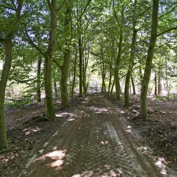 Pad met houten hek in het bos