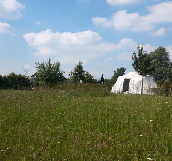 Tent in een groen veld met gras