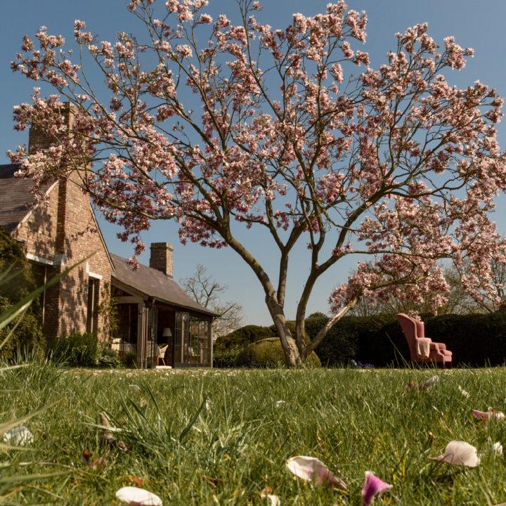 Bloeiende magnolia bij Mas Isa in de tuin