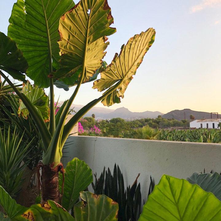 Logeren op een bananenplantage op de Canarische Eilanden