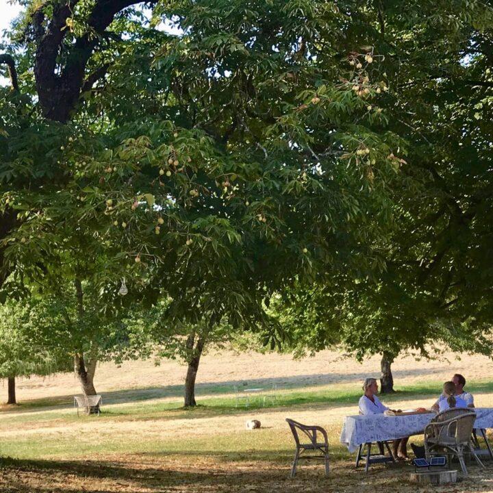 Gezin aan tafel in het gras