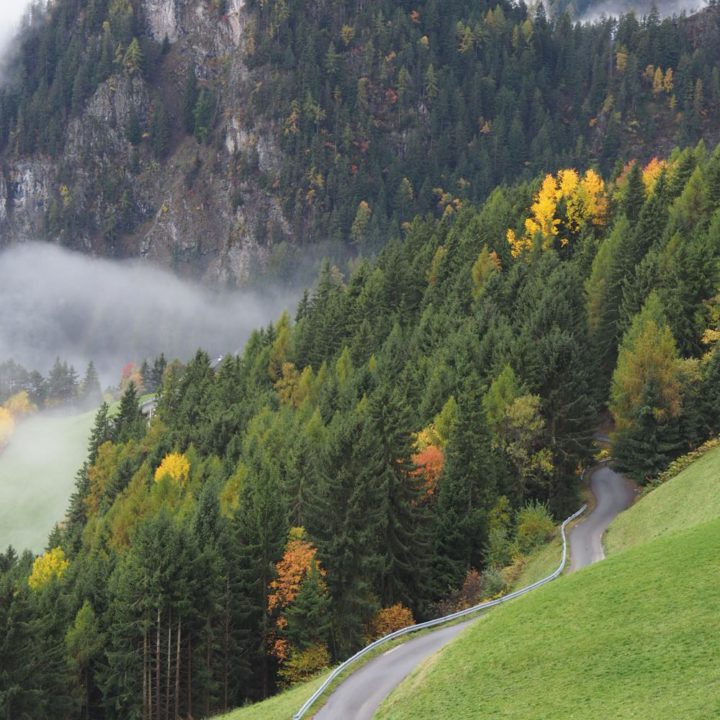 Uitzicht over de bossen op de berg