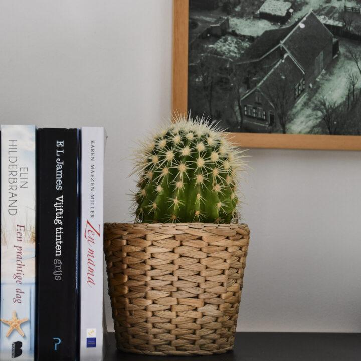 Plantje op de plank met boeken in de B&B