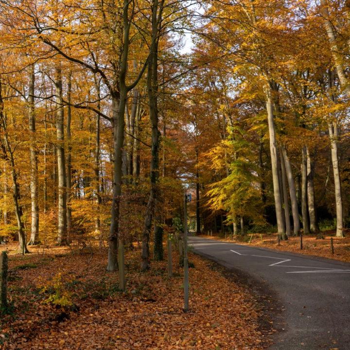 Herfstkleuren in het bos