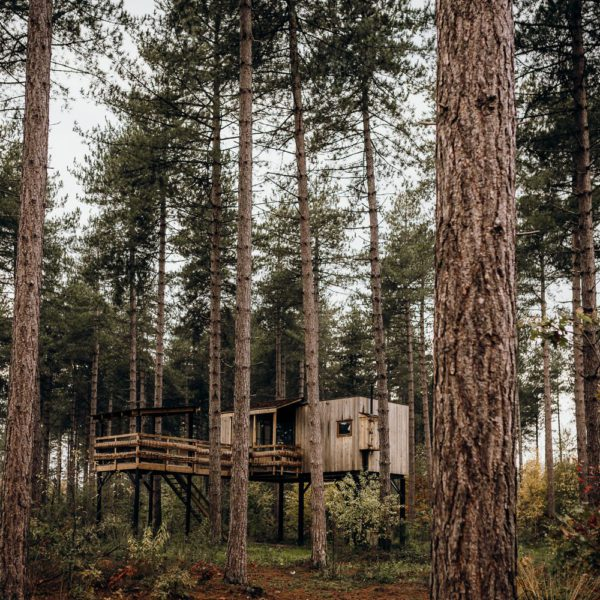 Boomhut in het dennenbos