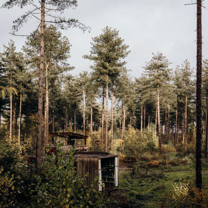 Cabins verstopt in het bos