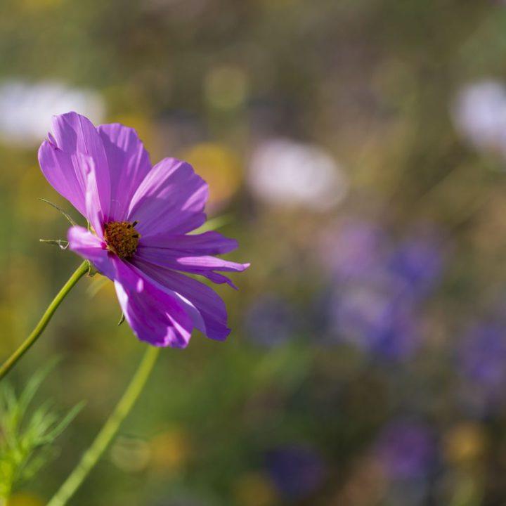 Paars bloemetje in het zonlicht