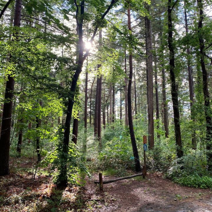 Zonlicht schijnt door de bomen in het bos