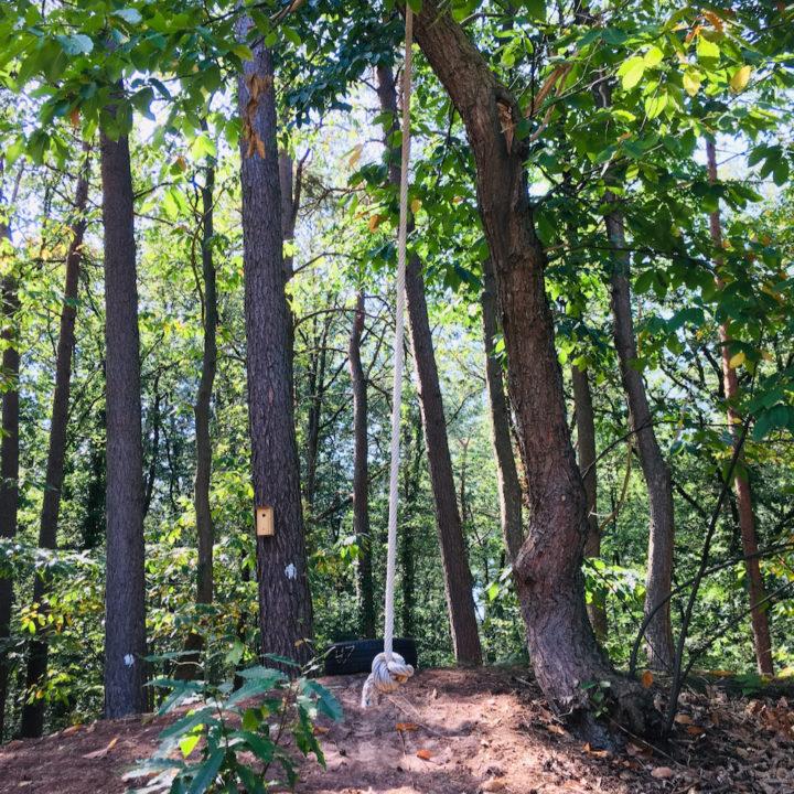 Touwschommel in het bos bij een vakantiehuis