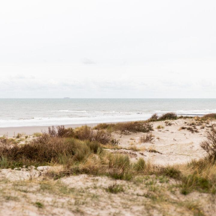 Duinen langs het strand bij Oostende