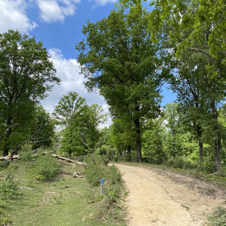 Wandelen op de Veluwe op zoek naar wild