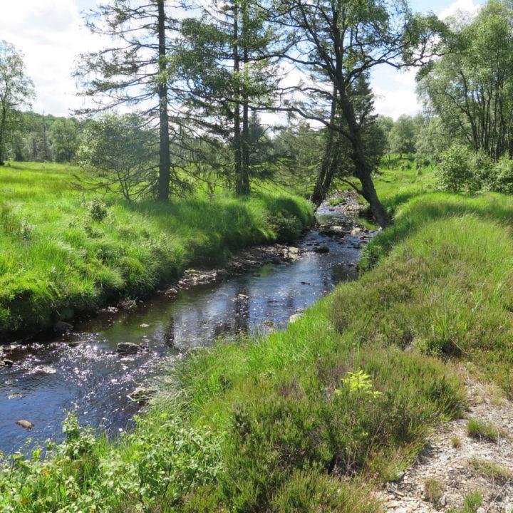 Een riviertje in de Ardennen