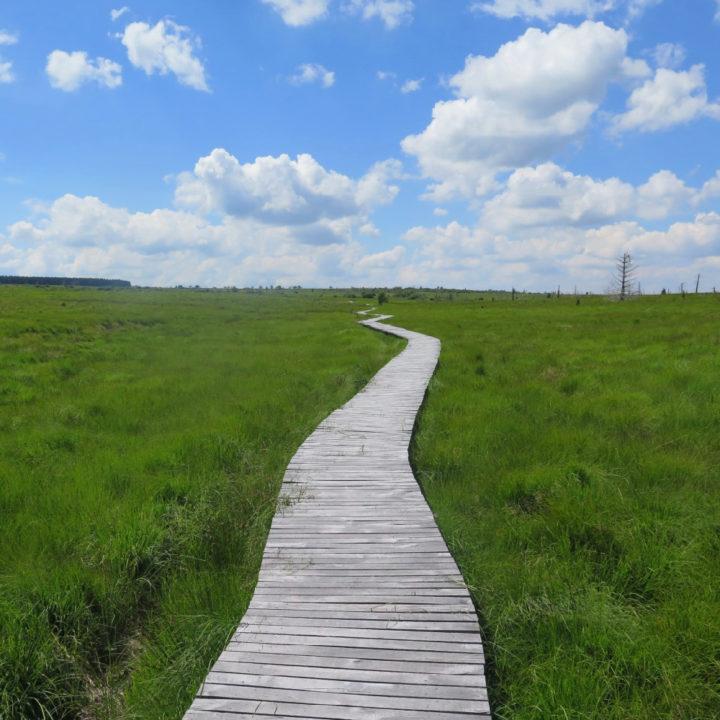 Een houten pad met aan weerszijden gras, wandelen in de Hoge Venen