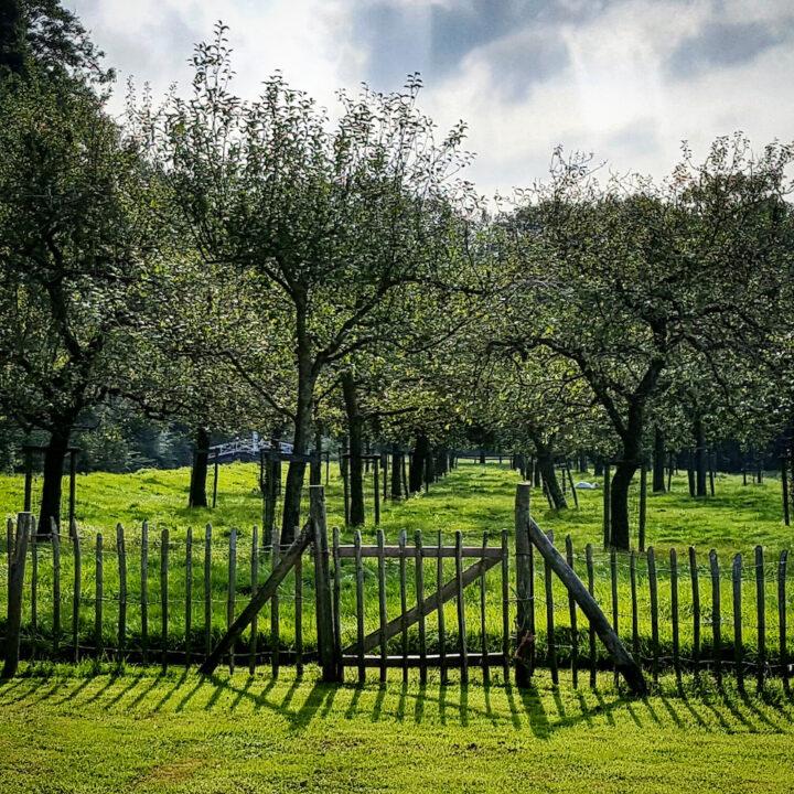 Boomgaard met fruitbomen