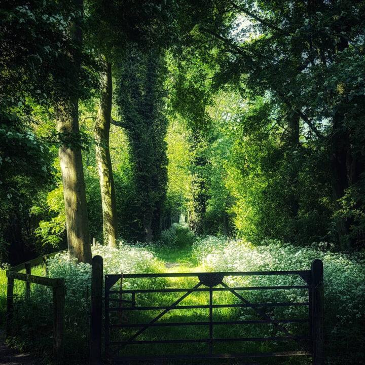 Wandelen op Landgoed Linschoten