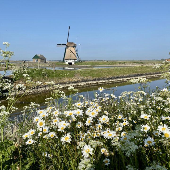 Molen op Texel