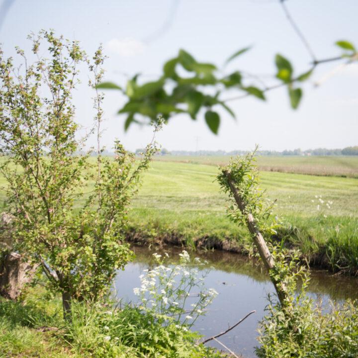 Natuur en uitzicht vanuit de molen