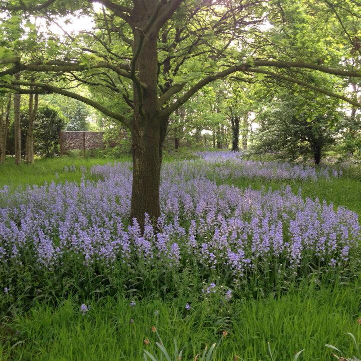 Paarse bloemenvelden