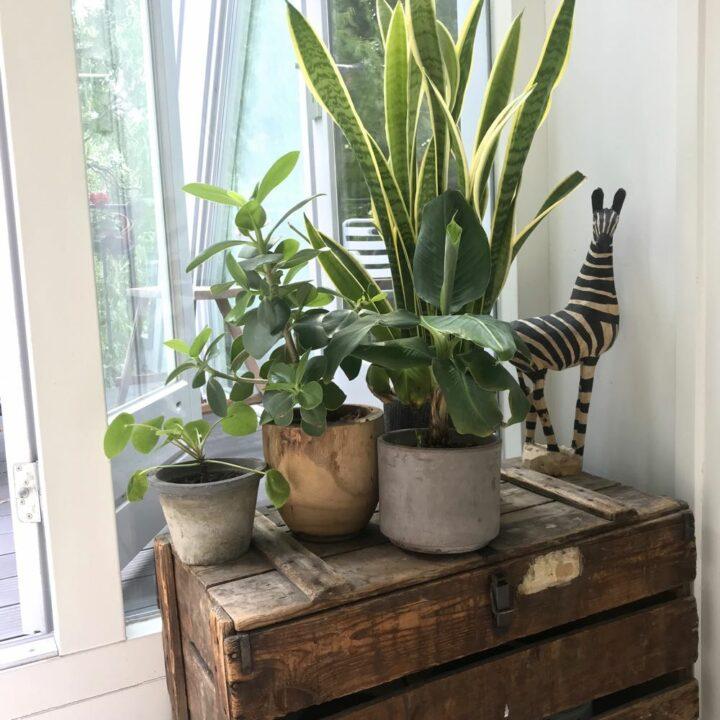 Planten en een zebra