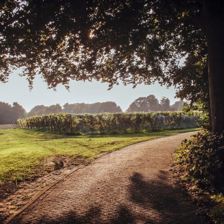 Oprijlaan naar het wijnterras in de wijngaard