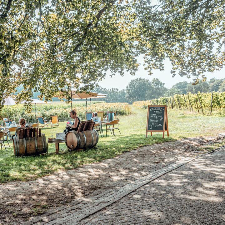 Terras in een wijngaard
