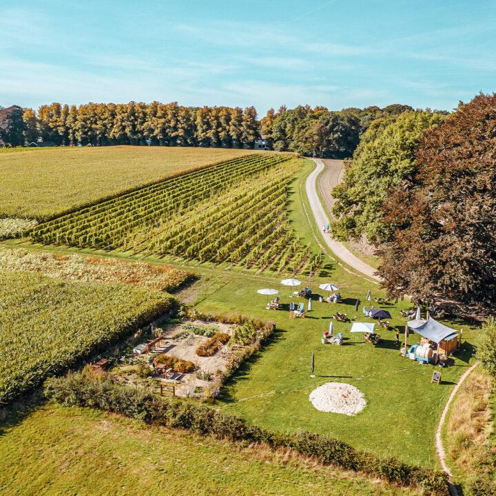 Luchtfoto van de wijngaard met een terras