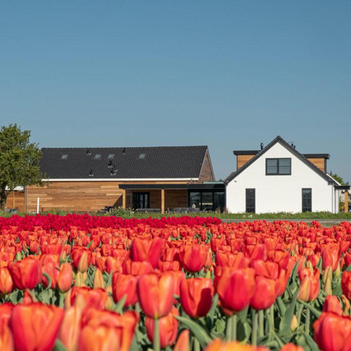 Rode tulpen voor de B&B
