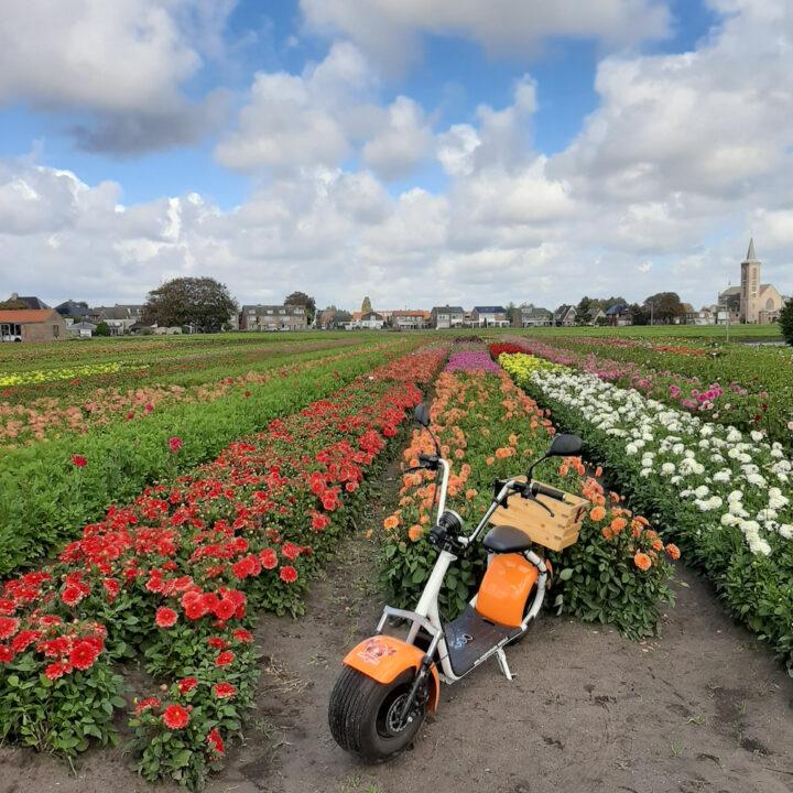 E-scooter tussen de bloembollen