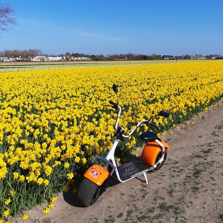 Gele narcissen met een e-scooter erbij