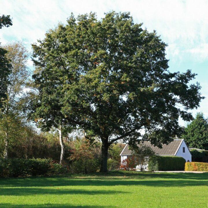Wit huisje in een grote tuin met een grote boom