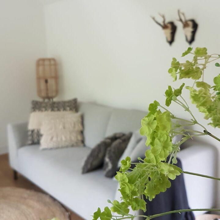 Groene plant met grijze bank met kussens