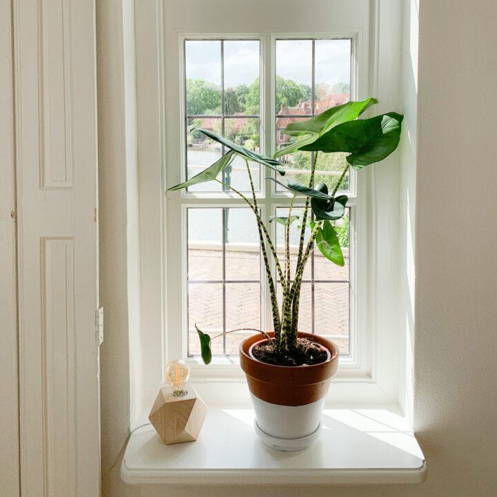 Plant in de hal in het vakantiehuis