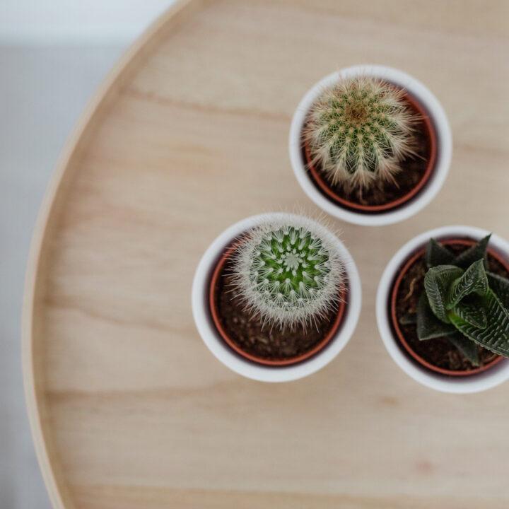 Cactussen op een houten tafeltje
