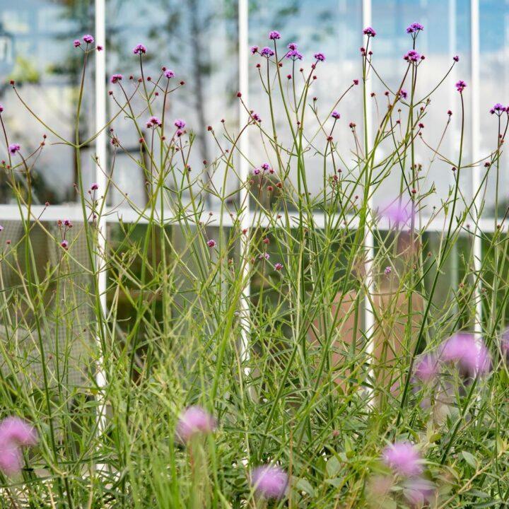 Bloemen in de tuin bij de kas