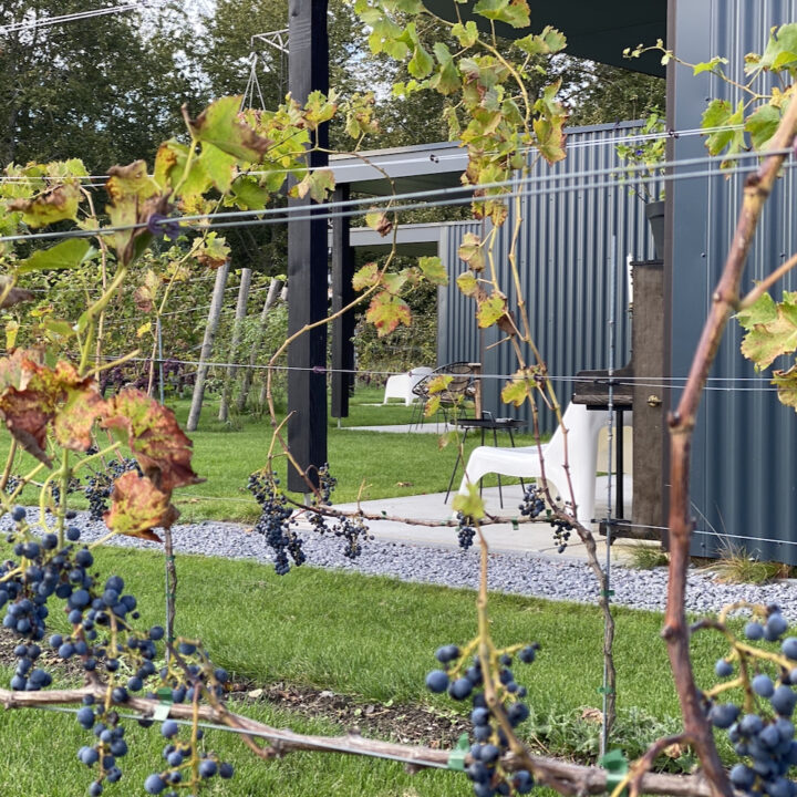 Vakantiehuizen in een wijngaard bij Almere
