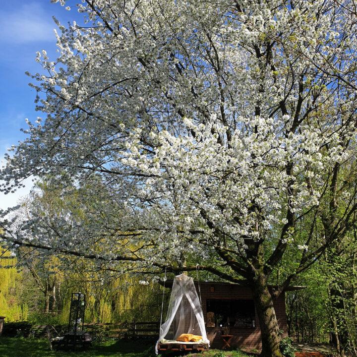 Ligbed met klamboe onder een boom vol bloesem