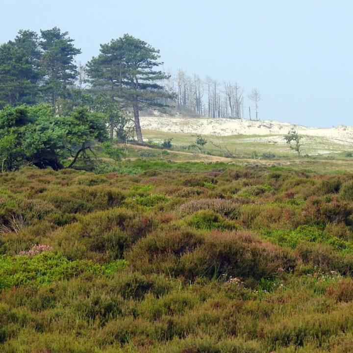Het vakantiehuisje in Schoorl ligt op loopafstand van bossen en duinen