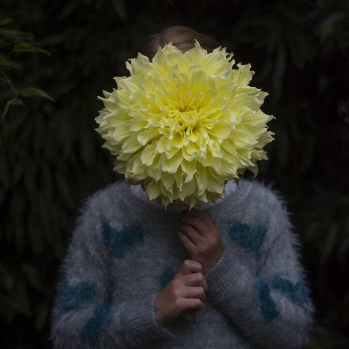 Een bloem zo groot als een gezicht