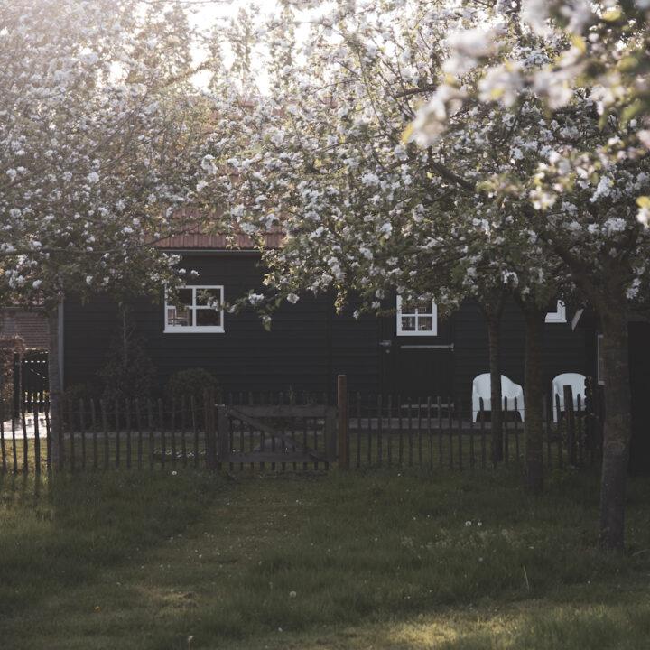 Houten huisje met bloesem in de fruitbomen