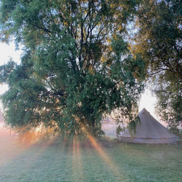 Bell tent in een weiland bij zonsopgang