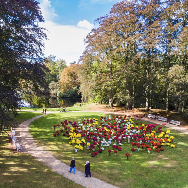 Bloemen op Landgoed Kasteel Groeneveld in Baarn