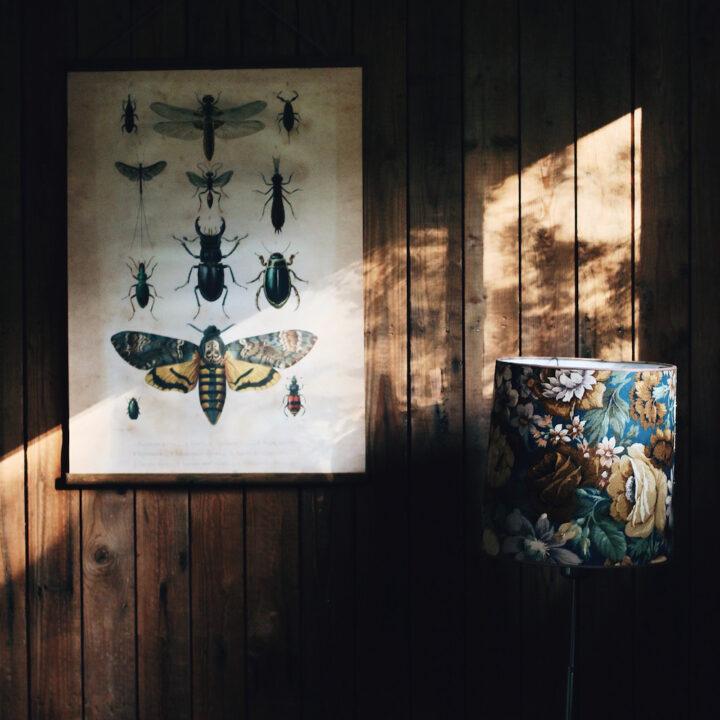 Natuur accessoires in het Boshuisje Putten
